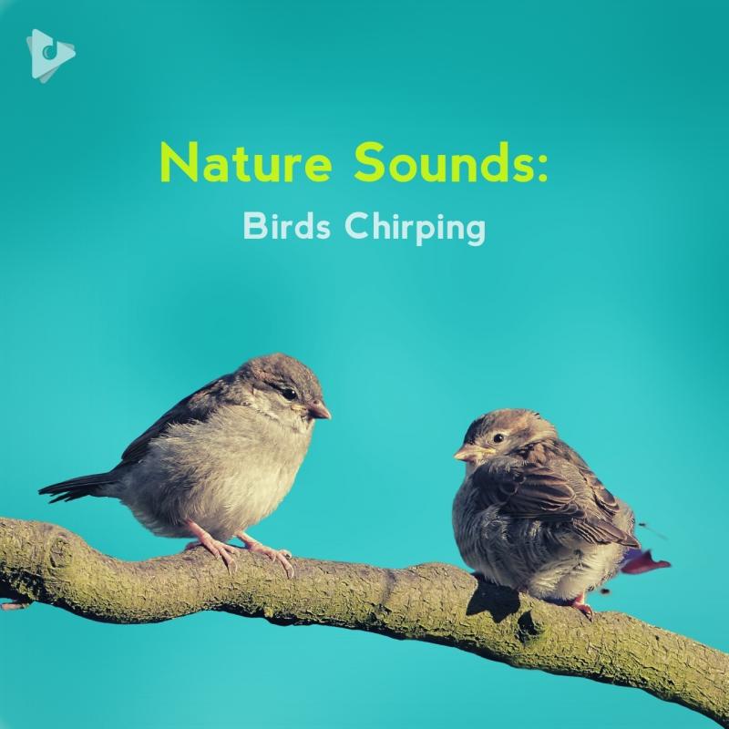 Nature Sounds: Birds Chirping