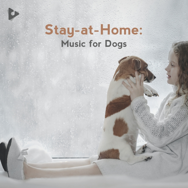 Stay-at-Home: Music for Dogs