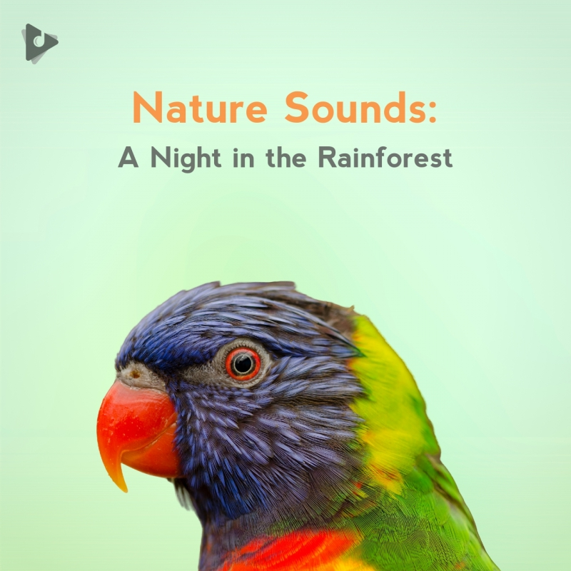 Nature Sounds: A Night in the Rainforest