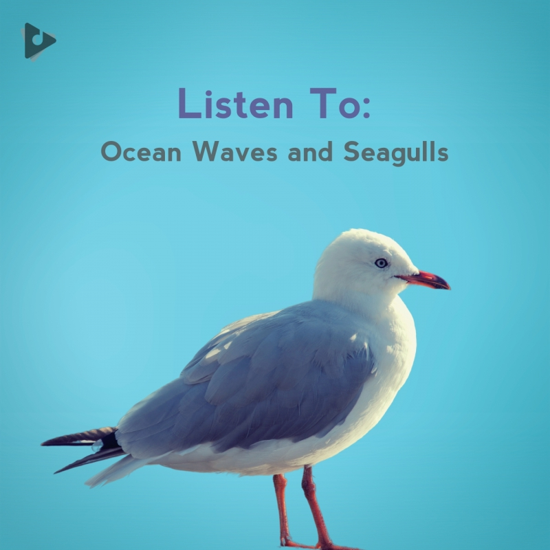 Listen To: Ocean Waves and Seagulls