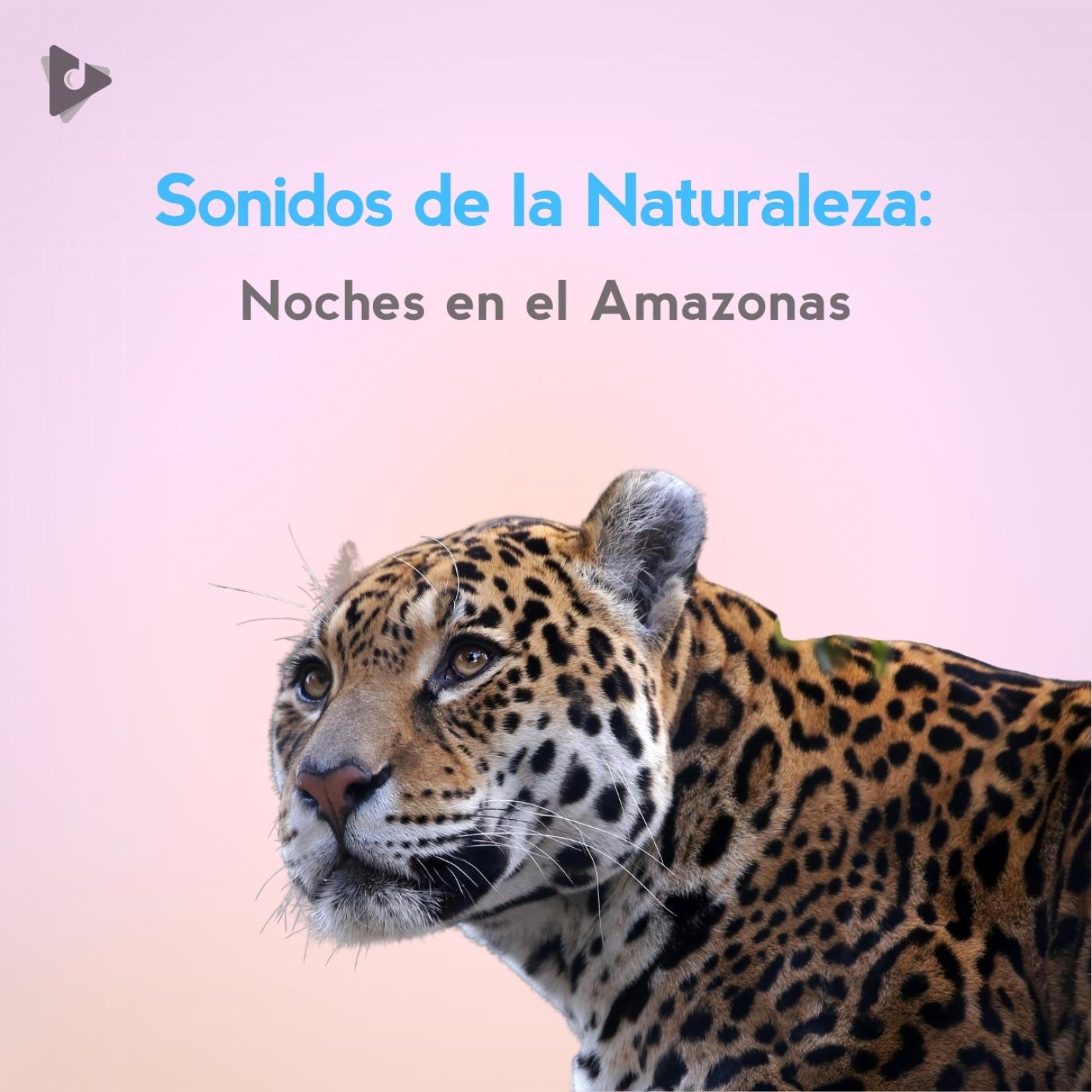 Sonidos de la Naturaleza: Noches en el Amazonas