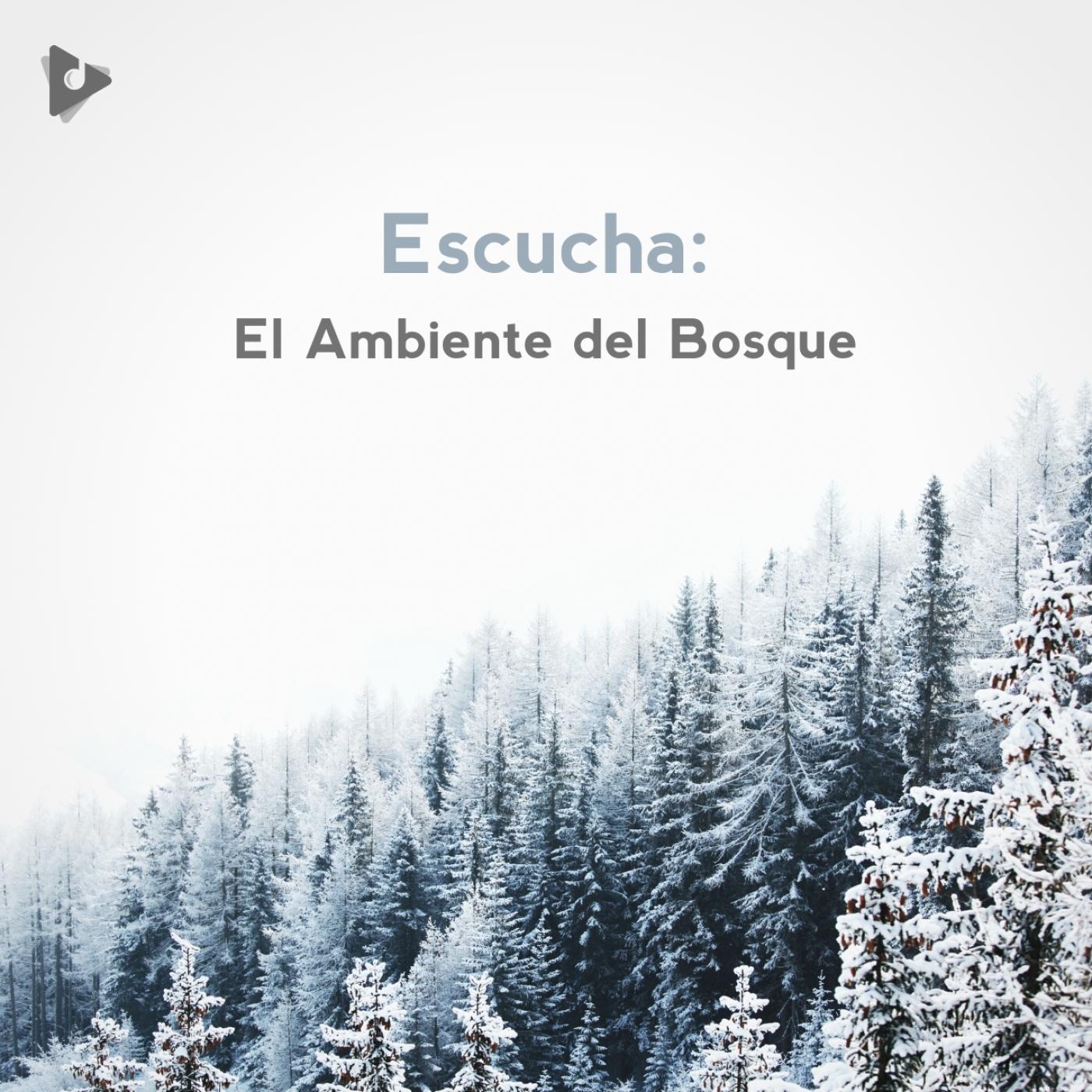 Escucha: El Ambiente del Bosque