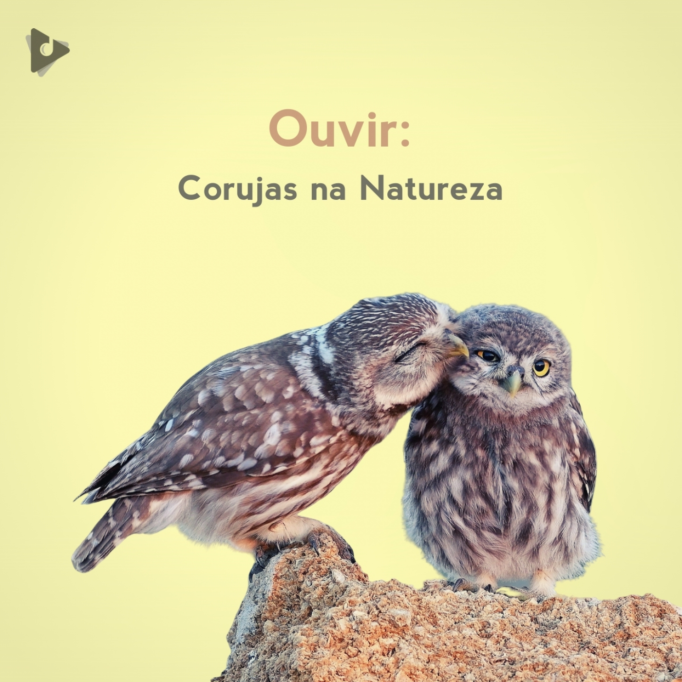 Ouvir: Corujas na Natureza