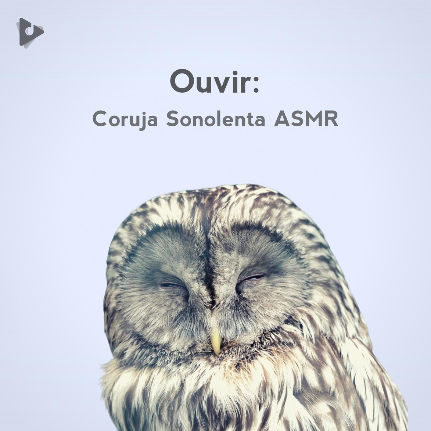 Ouvir: Coruja Sonolenta ASMR