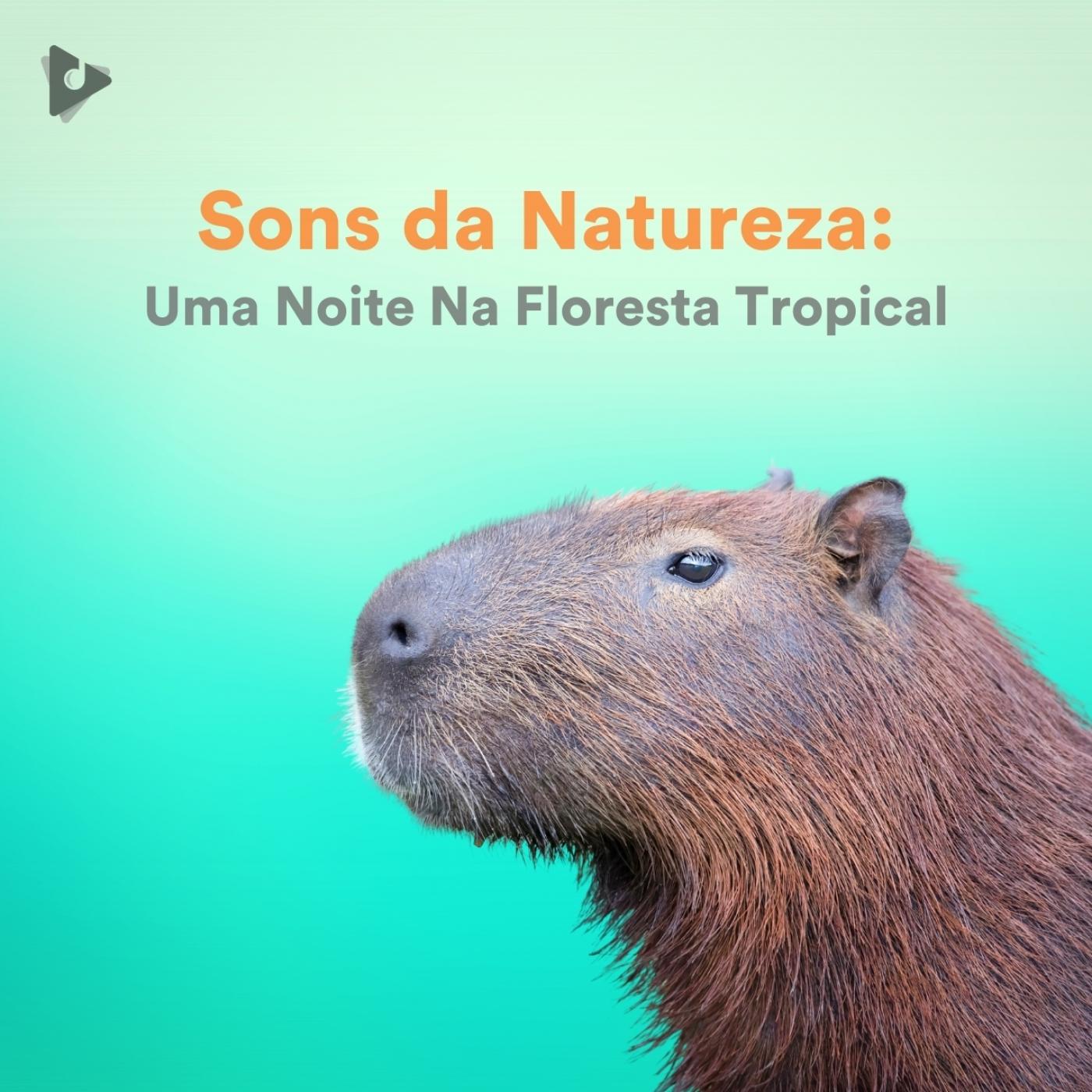 Sons da Natureza: Uma Noite Na Floresta Tropical