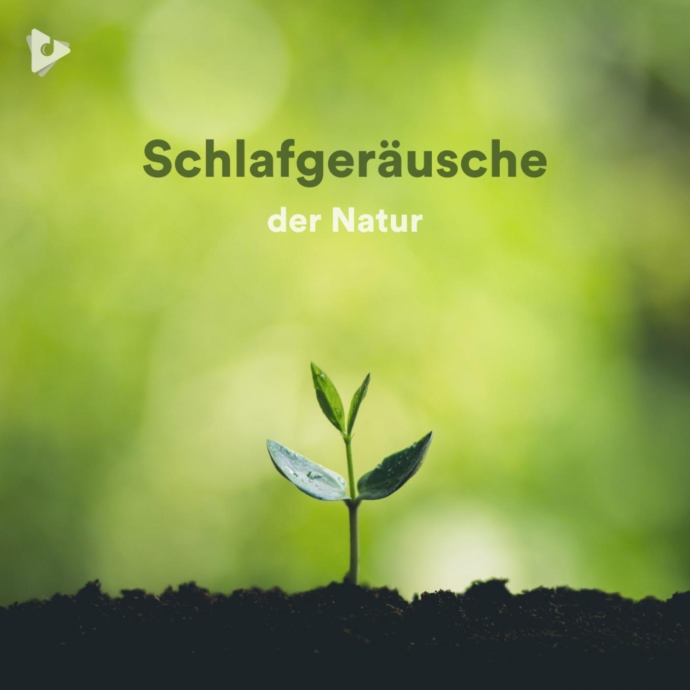 Schlafgeräusche der Natur