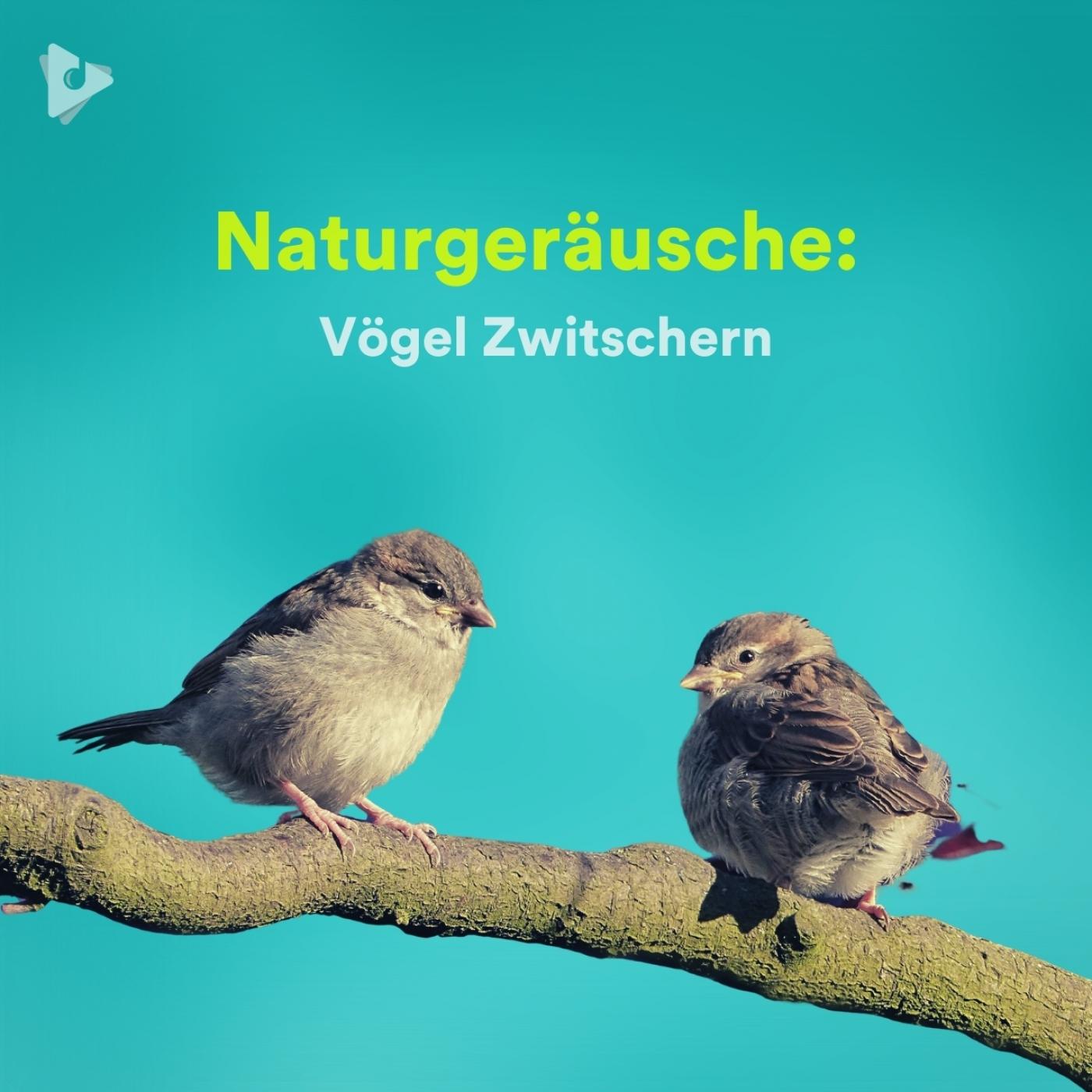 Naturgeräusche: Vögel Zwitschern