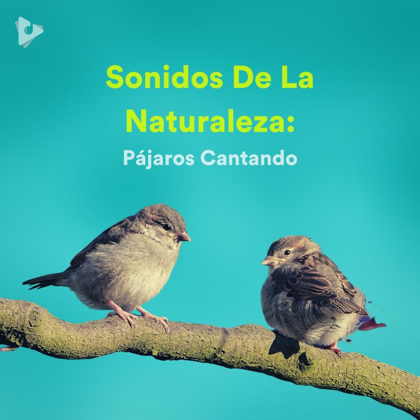 Sonidos De La Naturaleza: Pájaros Cantando