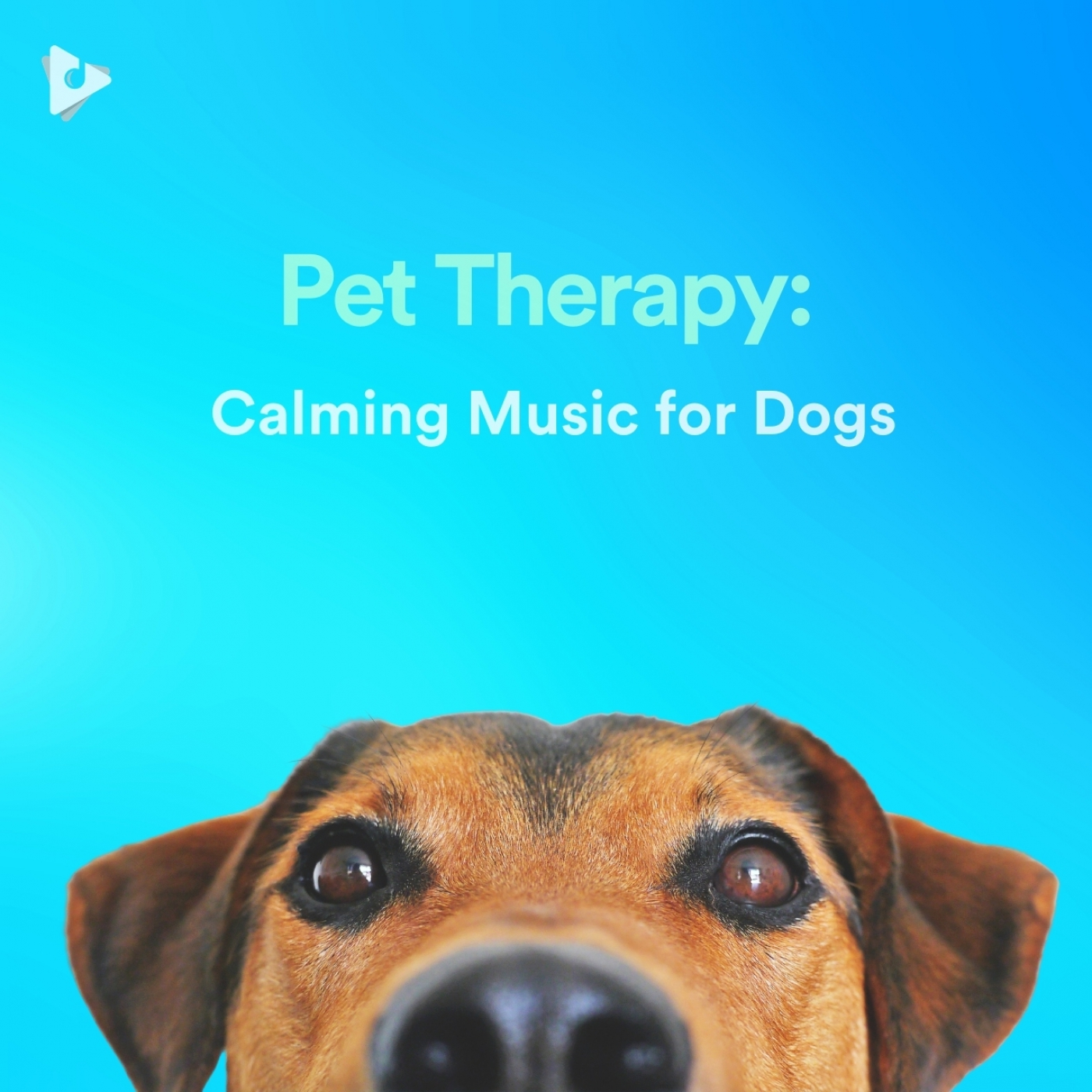 Pet Therapy: Calming Music for Dogs