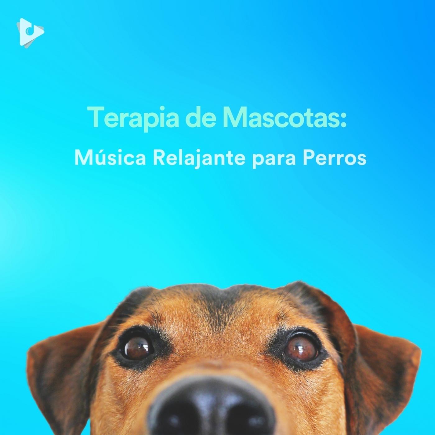 Terapia de Mascotas: Música Relajante para Perros