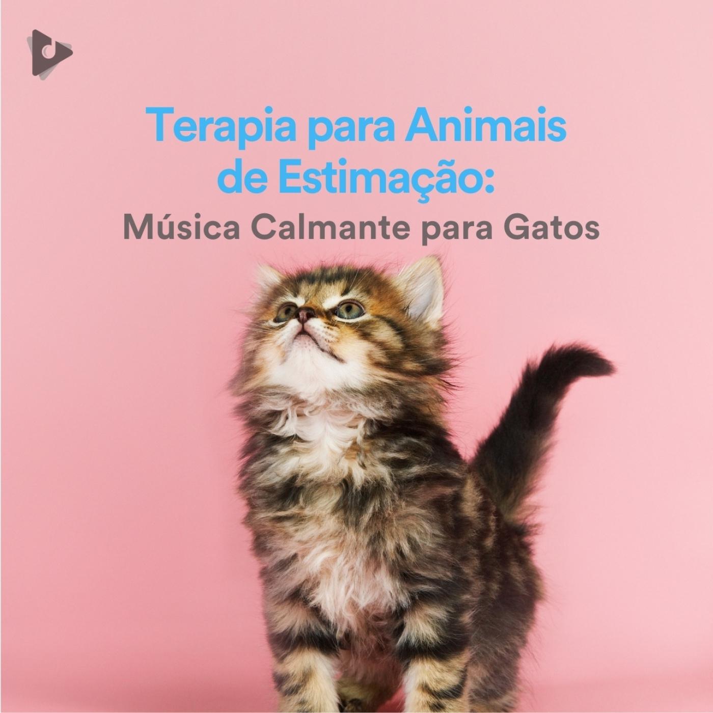 Terapia para Animais de Estimação: Música Calmante para Gatos