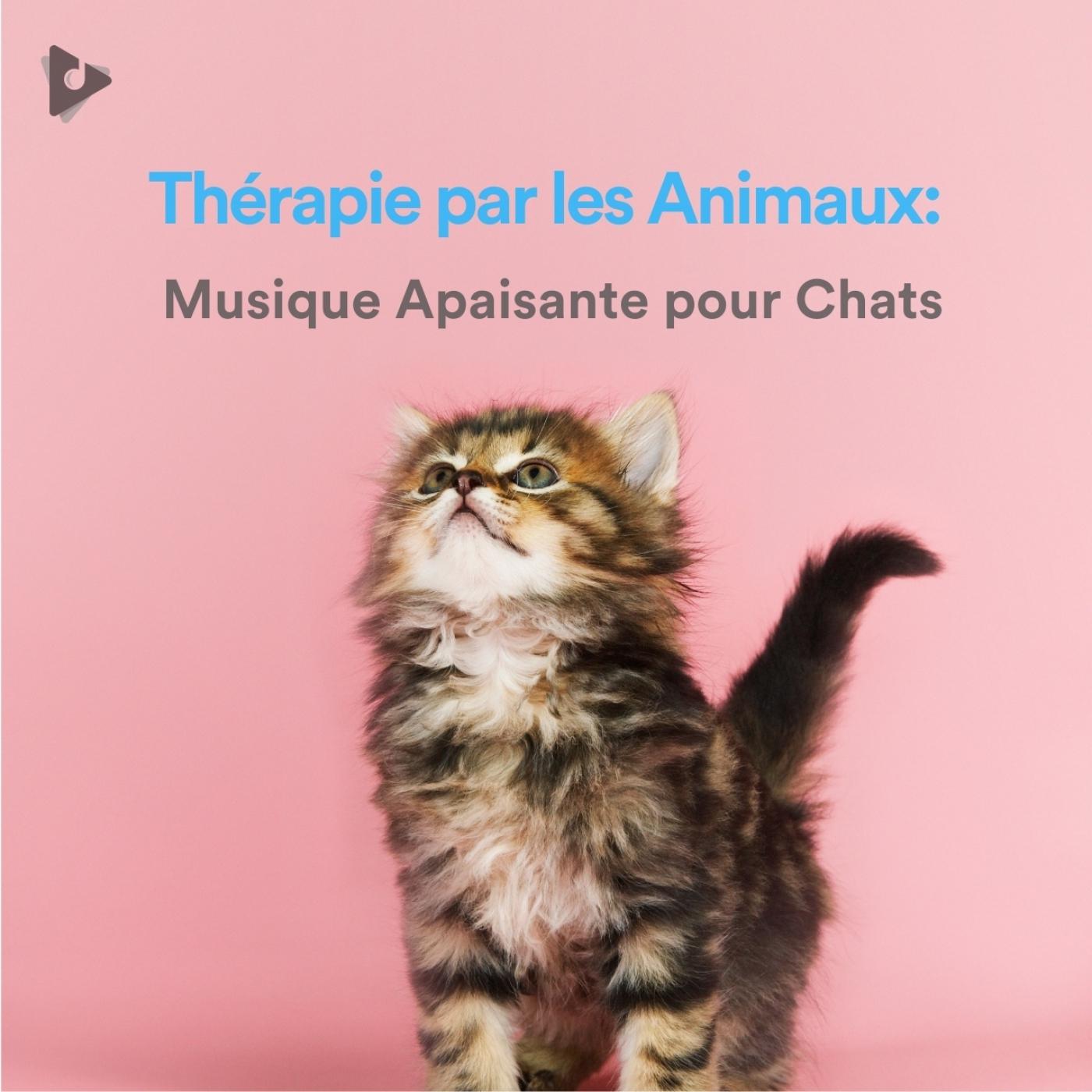 Thérapie par les Animaux: Musique Apaisante pour Chats
