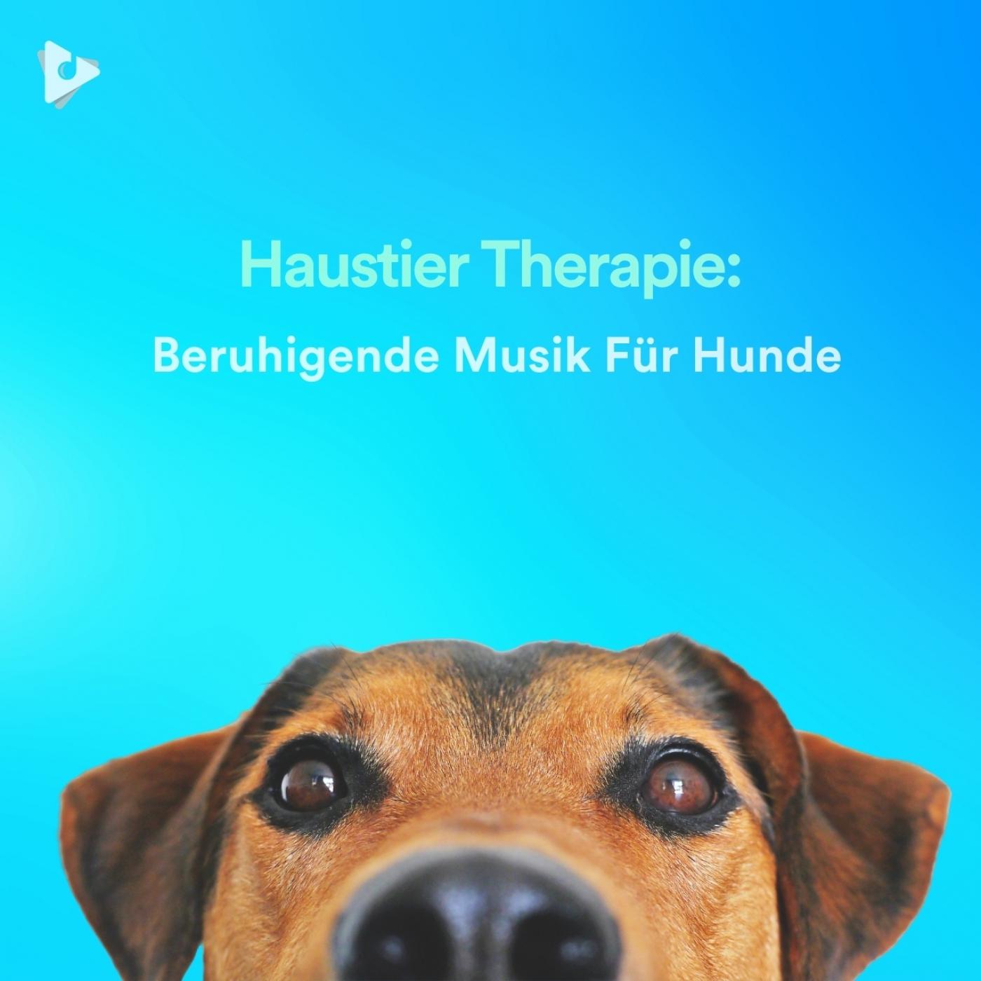 Haustier Therapie: Beruhigende Musik Für Hunde