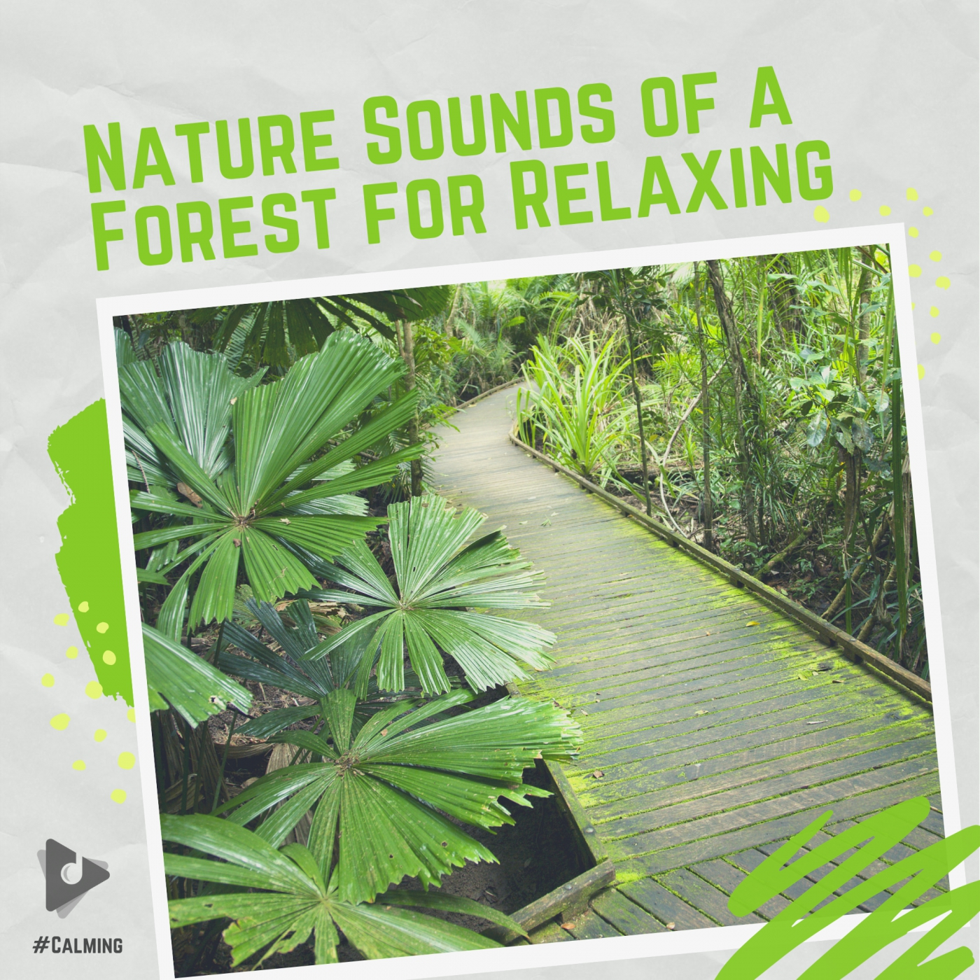 Nature Sounds of a Forest for Relaxing