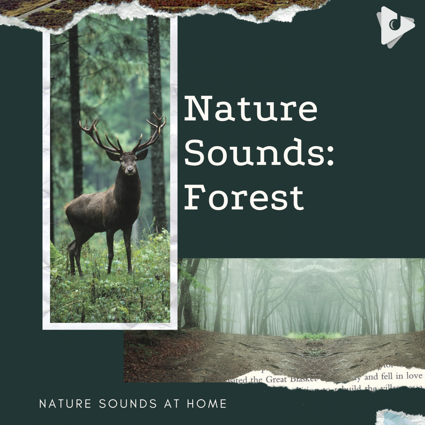 Nature Sounds: Forest