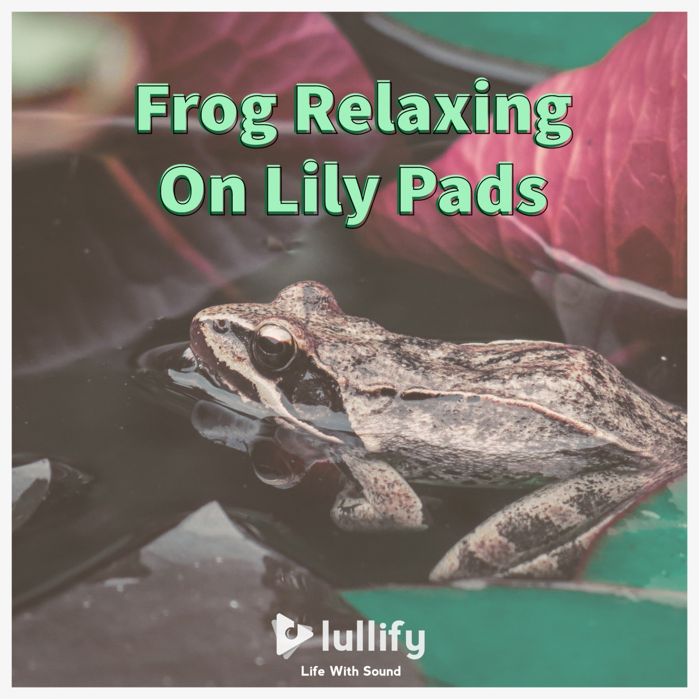 Frog Relaxing On Lily Pads