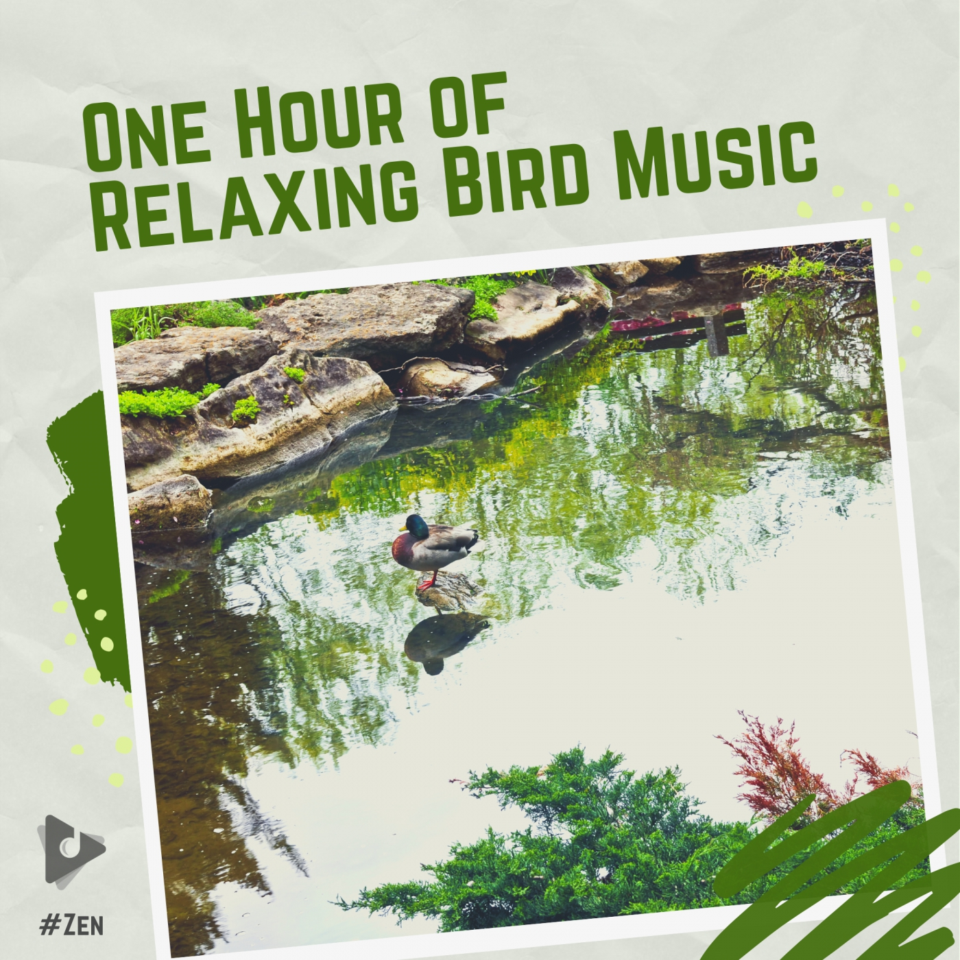 One Hour of Relaxing Bird Music