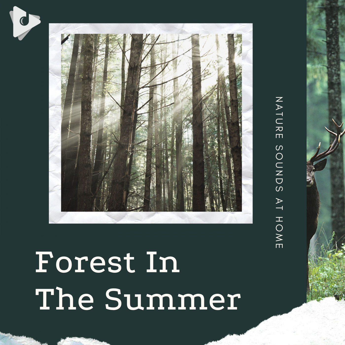 Forest In The Summer