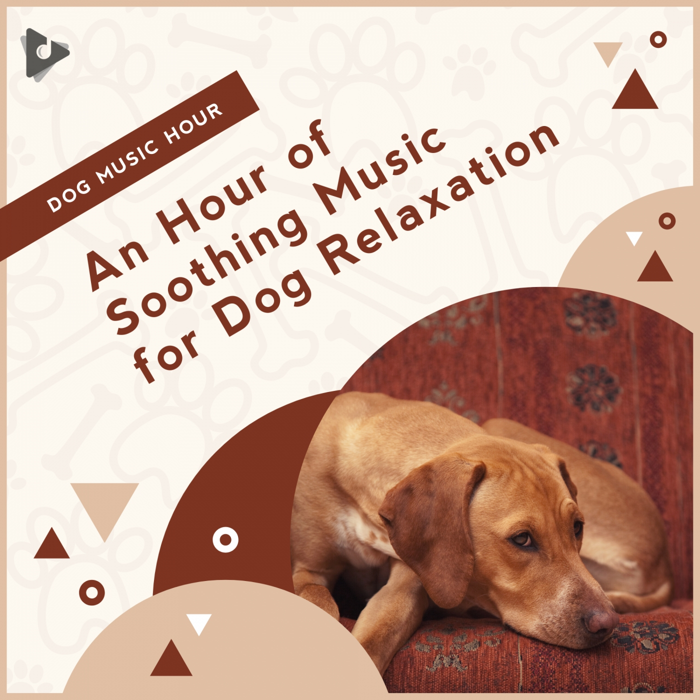An Hour of Soothing Music for Dog Relaxation