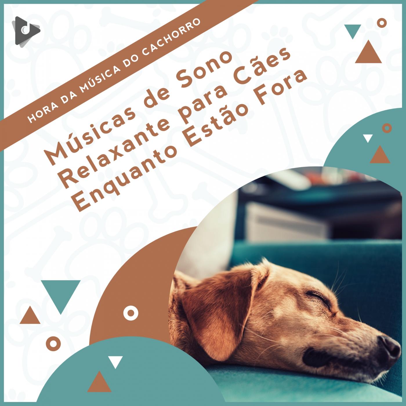 Músicas de Sono Relaxante para Cães Enquanto Estão Fora