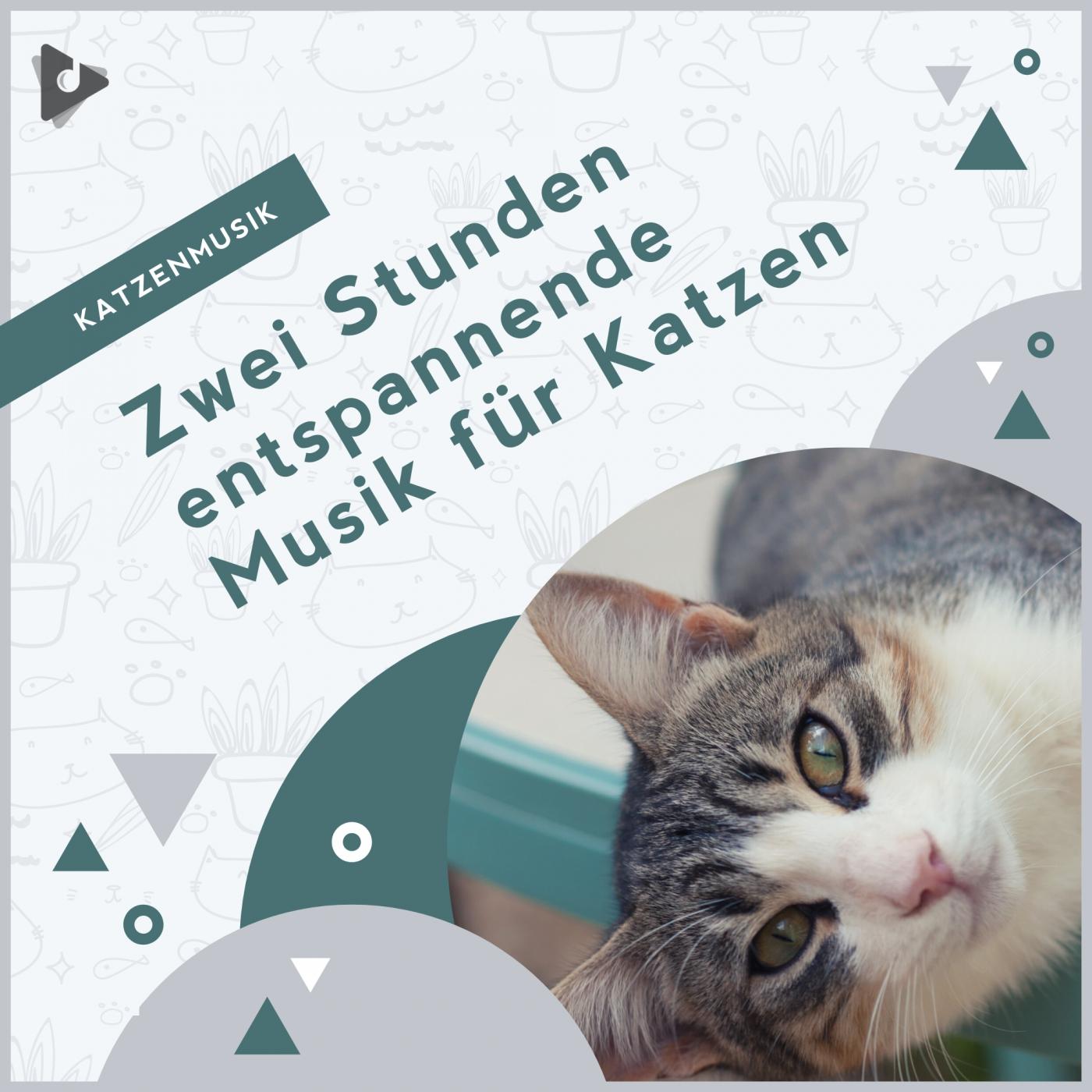 Zwei Stunden entspannende Musik für Katzen